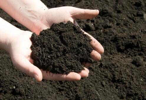 Lựa chọn đất để trồng rau sạch ở ban công