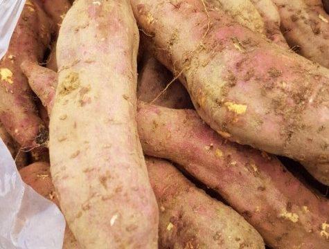 Mua khoai Đà Lạt – Giá bán khoai Đà Lạt hiện nay bao nhiêu?