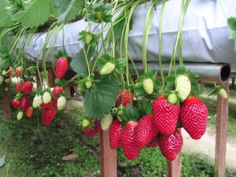 Những loại nông sản gieo trồng tại nhà được ưa thích