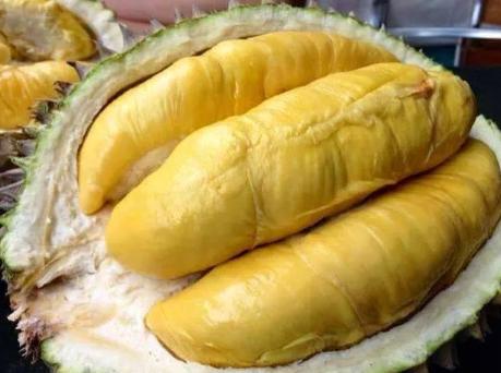 Ăn sầu riêng có bị mập không?