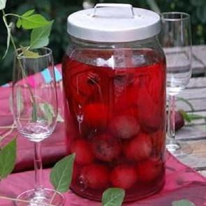 Cách ngâm rượu quả thanh mai – Loại trái cây cực kỳ tốt cho sức khỏe