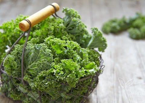 5 lợi ích sức khỏe của rau cải Kale tuyệt vời mà ít ai ngờ tới