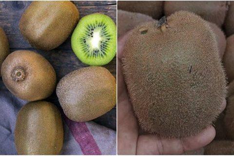 Cần thận trọng! Đọc ngay cách phân biệt Kiwi Trung Quốc và Kiwi New Zealand nhập khẩu