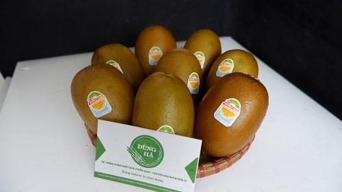 kiwi vàng nhập khẩu new zealand chất lượng