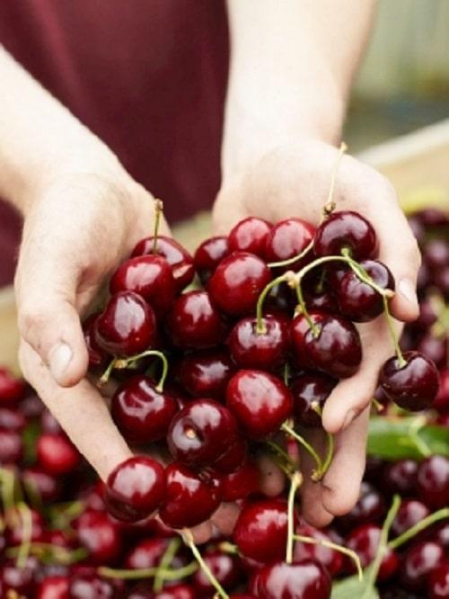 thành phần dinh dưỡng của trái cherry