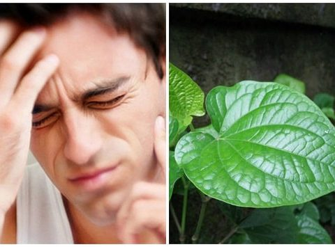 Cụ thể cách chữa đau bằng lá lốt hiệu quả như thế nào?