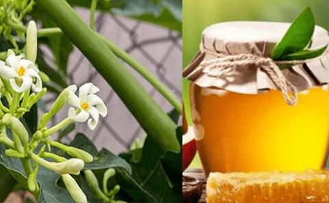 Hoa đu đủ đực ngâm mật ong – Bài thuốc dân giantrị bệnh hiệu quả